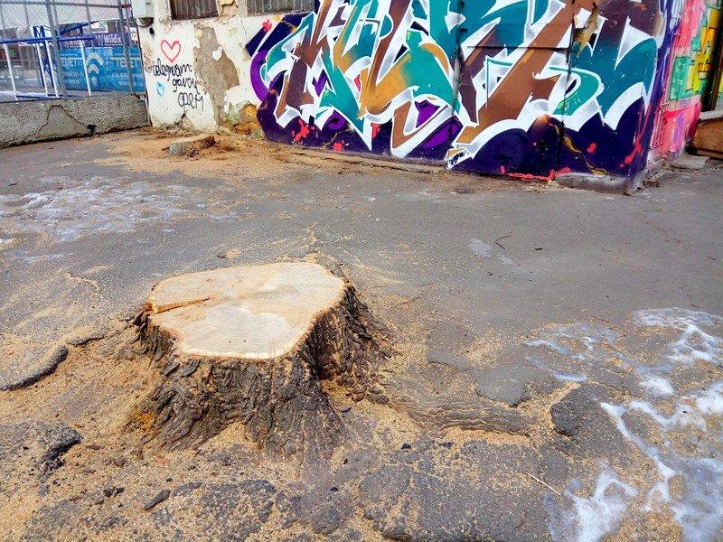 В одесском Старо-Базарном сквере спилили деревья (ФОТО), фото-4
