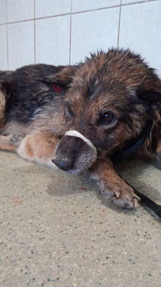Херсонцы просят помочь спасти собаку, которая провела трое суток на морозе в воде, фото-1