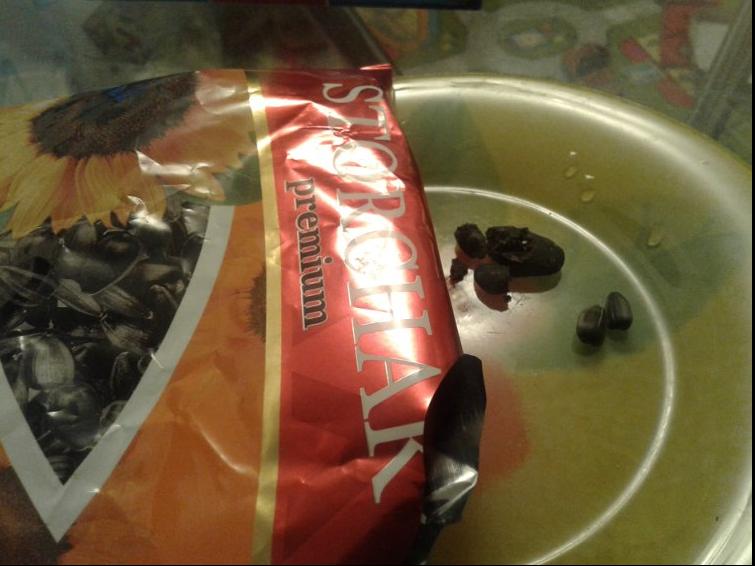 Одесситке в упаковке семечек попались фекалии крысы (ФОТО), фото-1