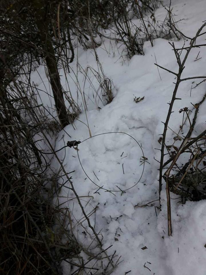 На Хортице браконьеры расставляют капканы для животных, - ФОТО, фото-2