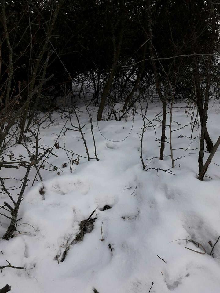 На Хортице браконьеры расставляют капканы для животных, - ФОТО, фото-3