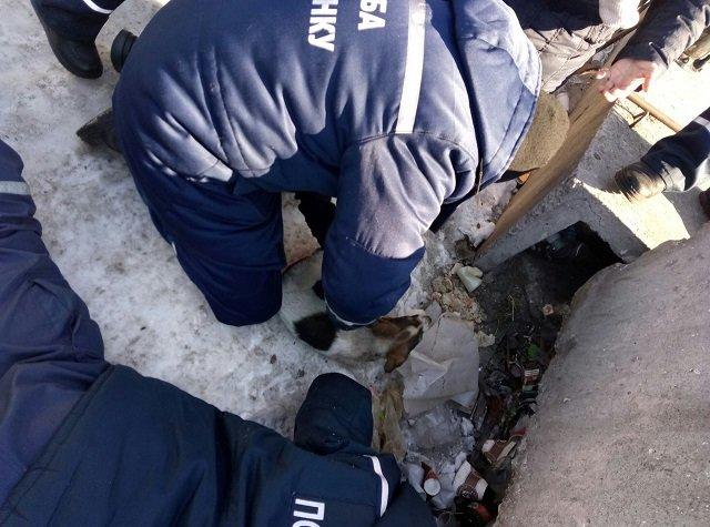 В Днепре спасатели освободили щенков из-под плит теплотрассы (ФОТО), фото-1