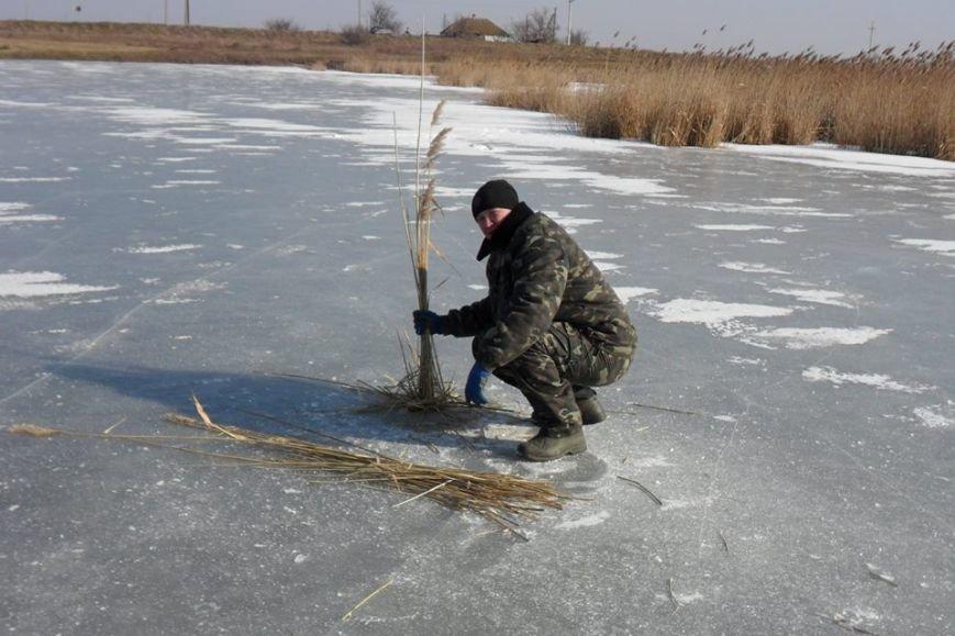 Обитателей водоемов Азовского бассейна спасали от верной смерти (фото), фото-1