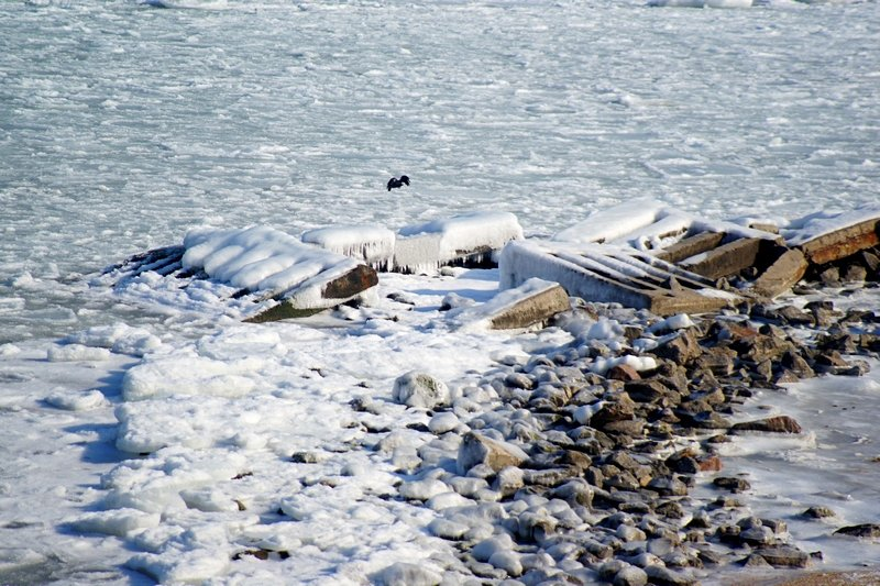 В Одессе вдоль Трассы здоровья растянулись километры льда (ВИДЕО, ФОТО), фото-25