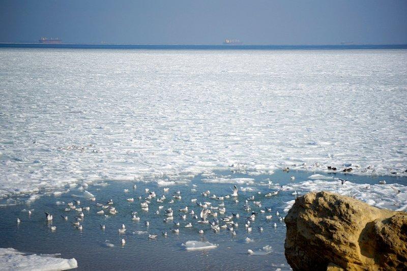 В Одессе вдоль Трассы здоровья растянулись километры льда (ВИДЕО, ФОТО), фото-6