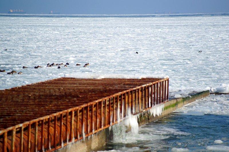 В Одессе вдоль Трассы здоровья растянулись километры льда (ВИДЕО, ФОТО), фото-24
