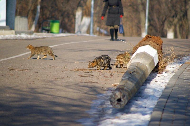 Вдоль одесских пляжей разрушили фонарные столбы (ФОТО), фото-1