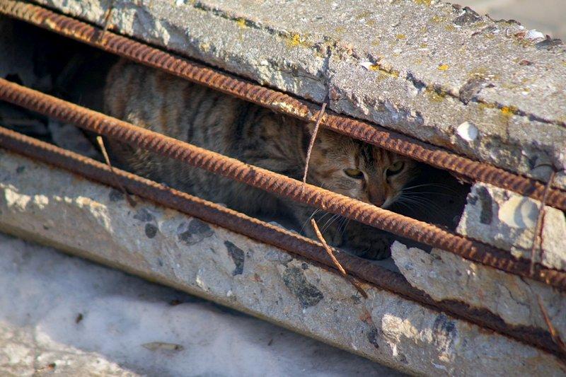 Вдоль одесских пляжей разрушили фонарные столбы (ФОТО), фото-2