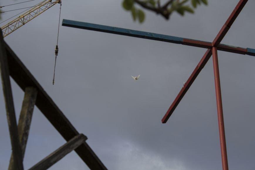 Последний голубятник. Белгородский заводчик птиц мира – о ястребах, дикарях и своём хрупком хобби, фото-5