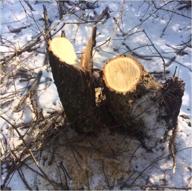 Як на закарпатському кордоні ліс вирубували: фото, фото-1