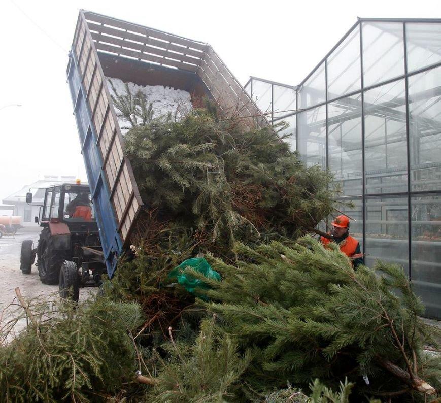 Киевляне сдали на утилизацию 10 тыс. новогодних елок, фото-1