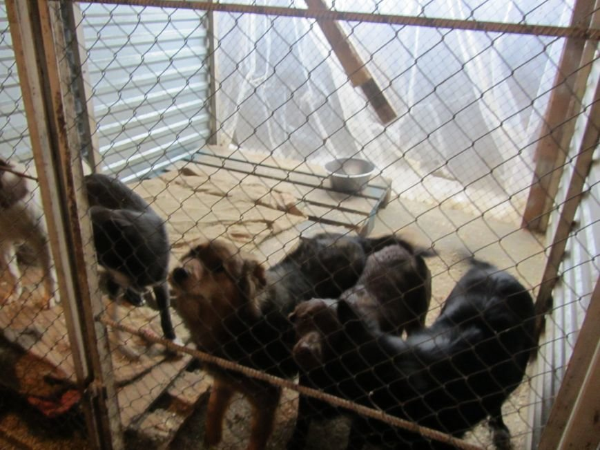 Проблеми співіснування білоцерківців з тваринами, фото-7
