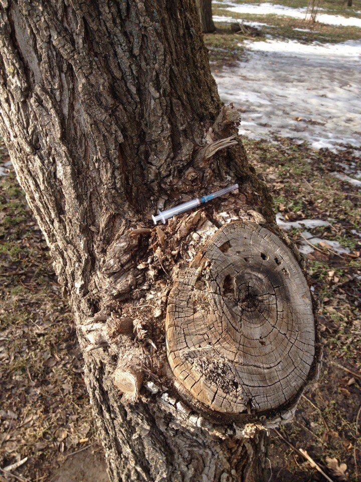 В Херсоне использованные шприцы повсюду (фото), фото-1