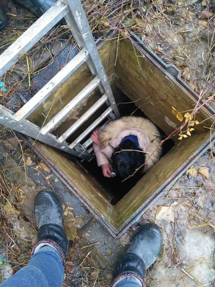 В Ужгороді рятувальники та зоозахисники провели операцію з порятунку собаки Боббі із шахти теплотраси: фото, відео, фото-3