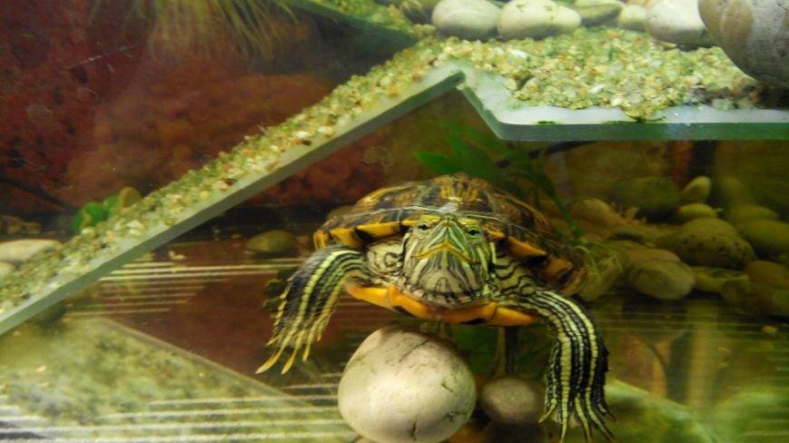 Новомосковск 0569 черепаха