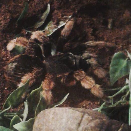 Новомосковск 0569 паук