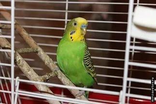 Новомосковск 0569 попугай