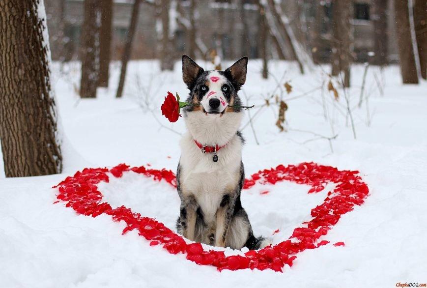 День Валентина6