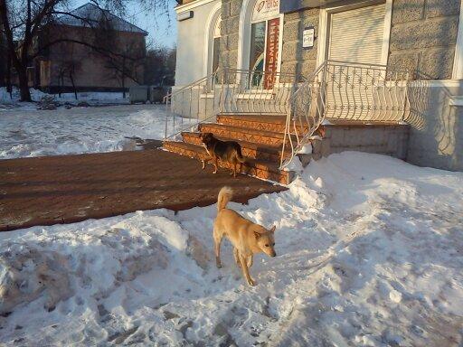 Зоозащитники или догхантеры: Кто защитит криворожан от бродячих собак? (ФОТО), фото-7