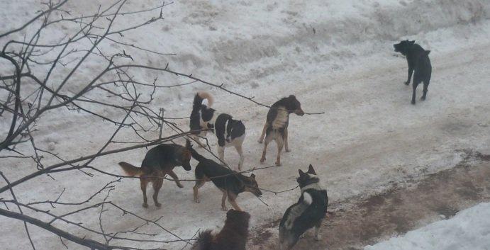 Зоозащитники или догхантеры: Кто защитит криворожан от бродячих собак? (ФОТО), фото-6