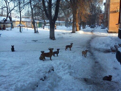 Зоозащитники или догхантеры: Кто защитит криворожан от бродячих собак? (ФОТО), фото-5