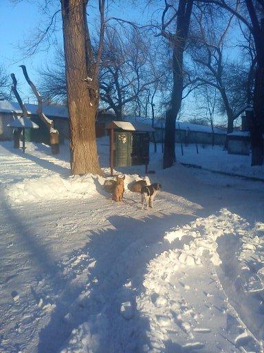 Зоозащитники или догхантеры: Кто защитит криворожан от бродячих собак? (ФОТО), фото-2