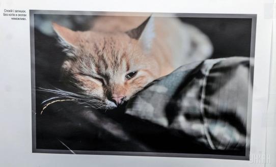 В Киеве открылась фотовыставка брошенных на Донбассе домашних животных, фото-3