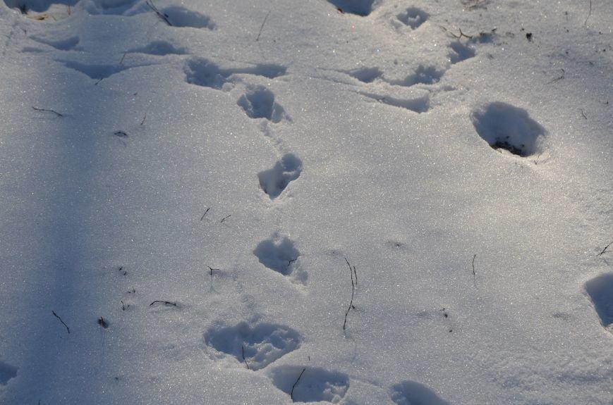 Следы на снегу, фото-4