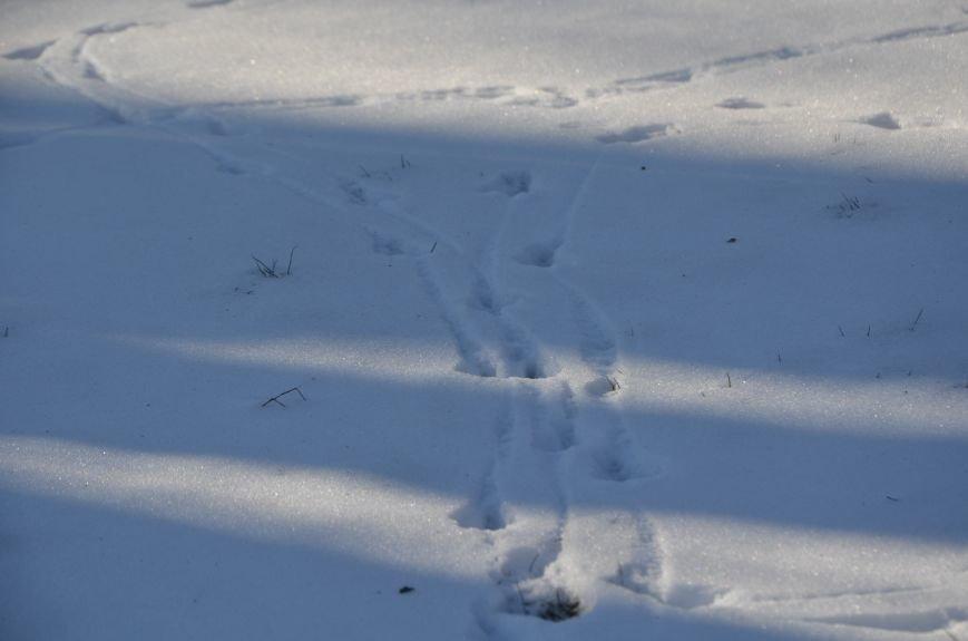Следы на снегу, фото-6