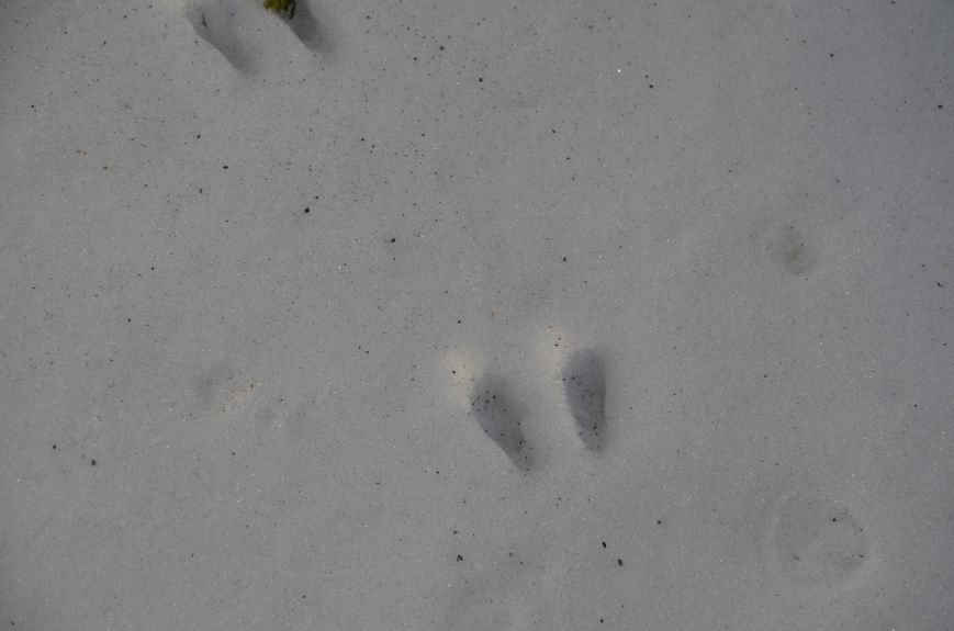 Следы на снегу, фото-5