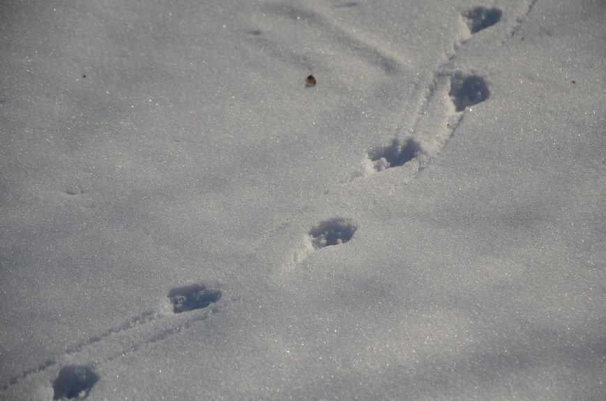 Следы на снегу, фото-12