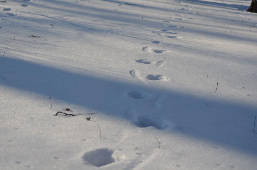 Следы на снегу, фото-9