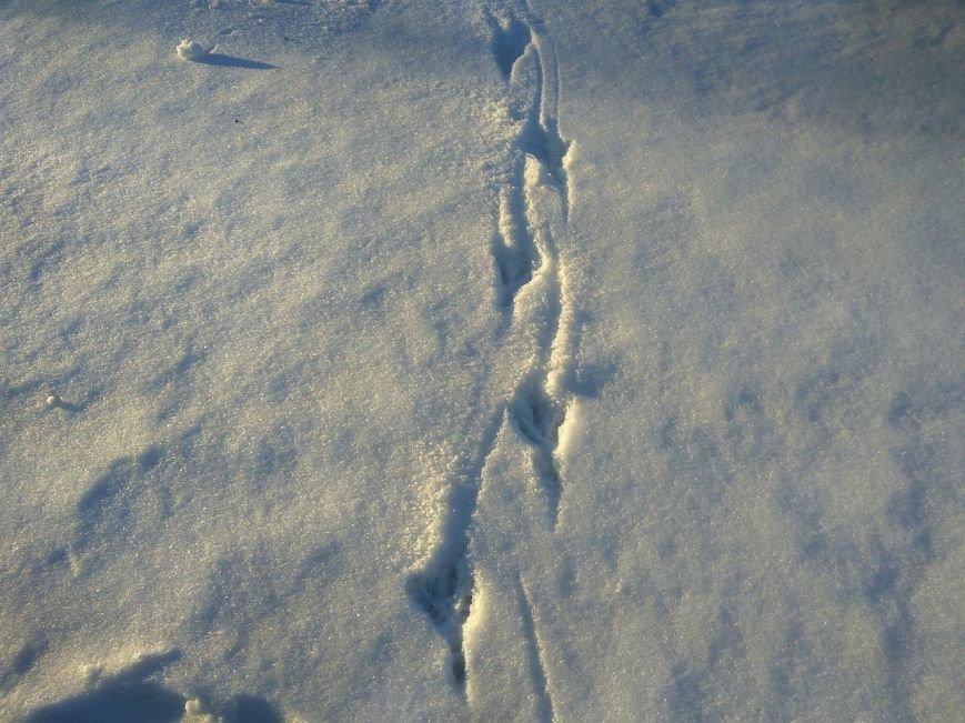 Следы на снегу, фото-22