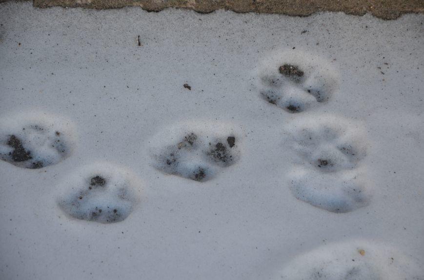 Следы на снегу, фото-2