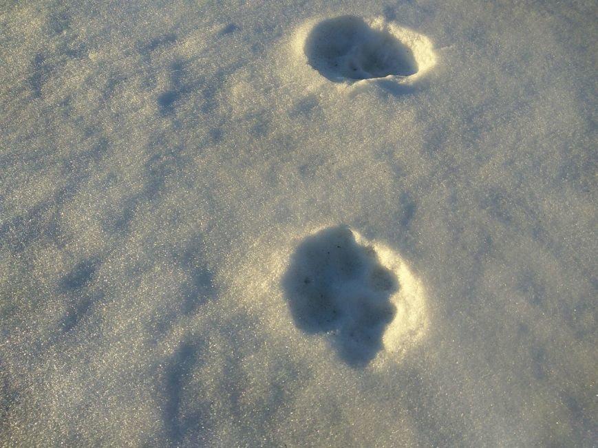 Следы на снегу, фото-20