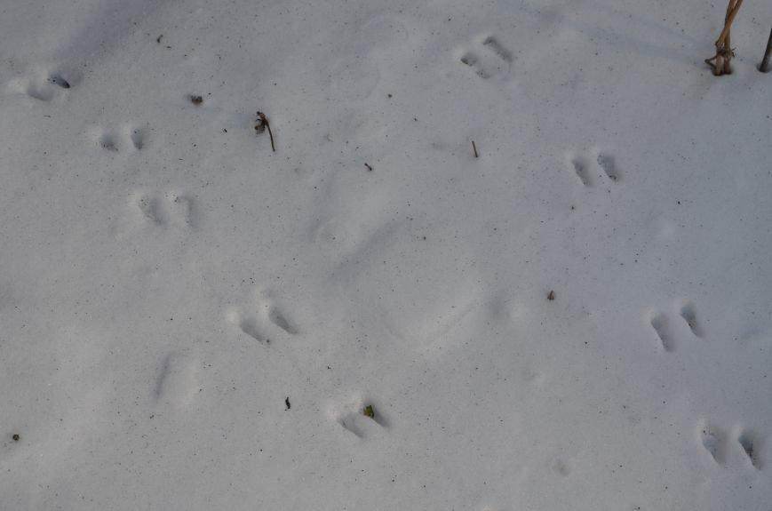 Следы на снегу, фото-3