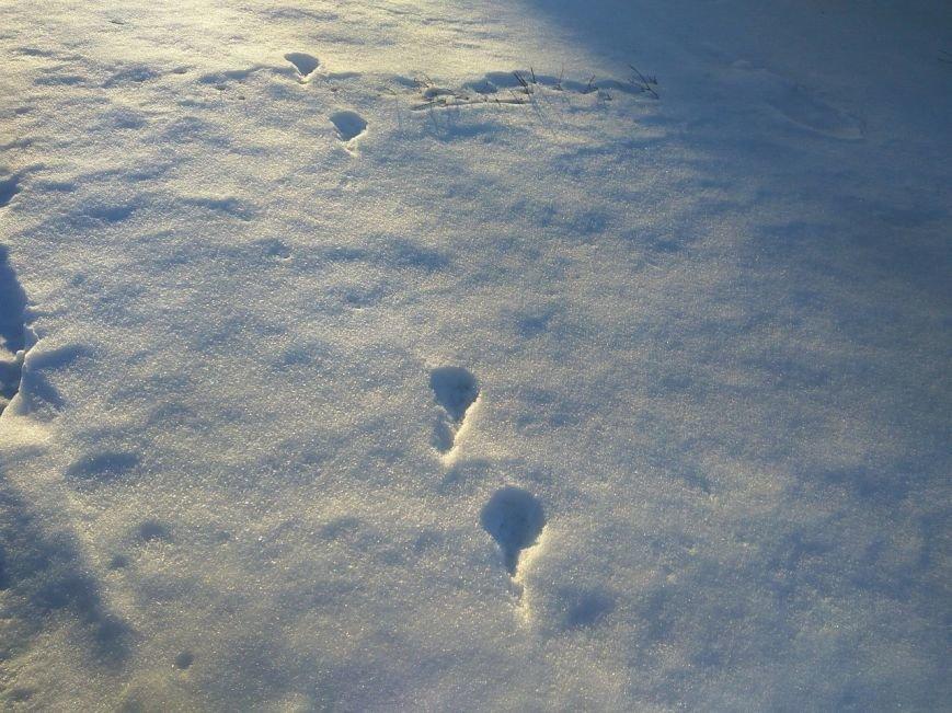Следы на снегу, фото-18
