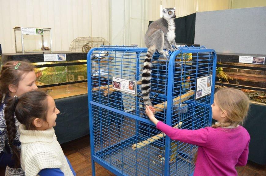 Школьники подружились с говорящими попугаями и неугомонными обезьянами (фото), фото-4
