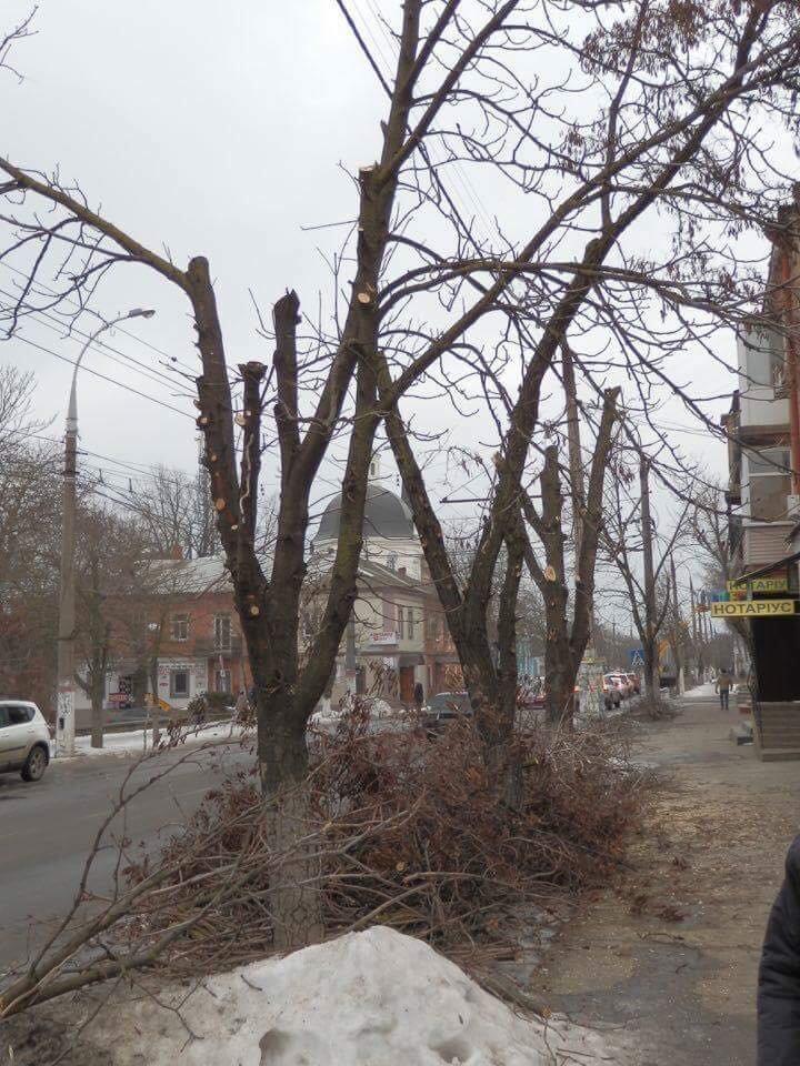 В Херсоне варварски уничтожают деревья, - городской депутат (фото), фото-3