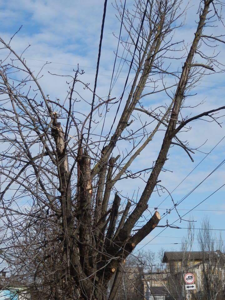 В Херсоне варварски уничтожают деревья, - городской депутат (фото), фото-2