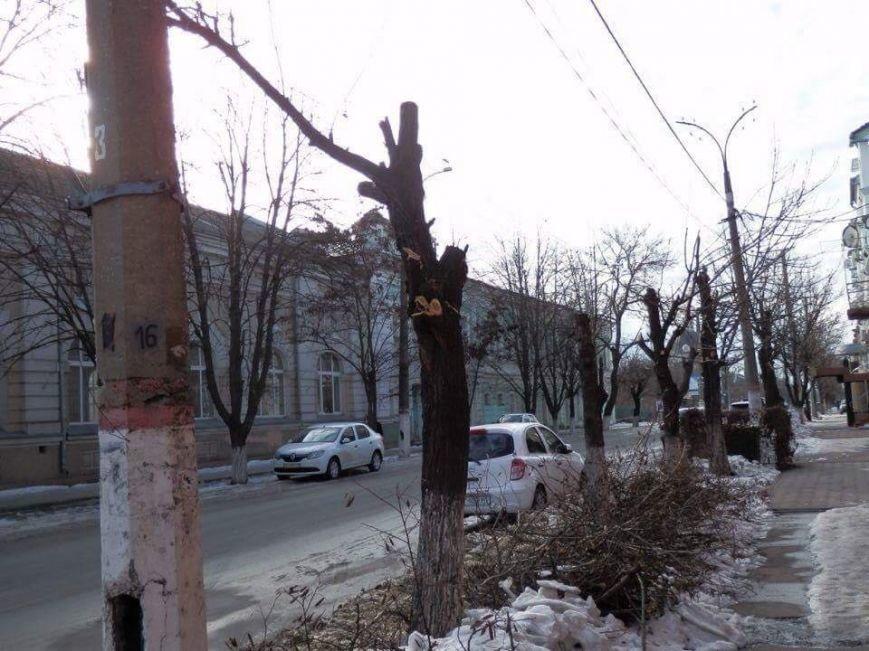 В Херсоне варварски уничтожают деревья, - городской депутат (фото), фото-1