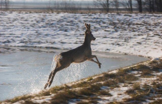 """Закарпатський льодохід добрався до Угорщини - дикі тварини """"гуляють"""" кригою: фото, відео, фото-6"""