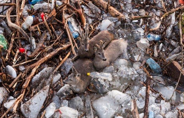 """Закарпатський льодохід добрався до Угорщини - дикі тварини """"гуляють"""" кригою: фото, відео, фото-1"""