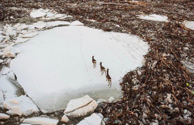 """Закарпатський льодохід добрався до Угорщини - дикі тварини """"гуляють"""" кригою: фото, відео, фото-5"""
