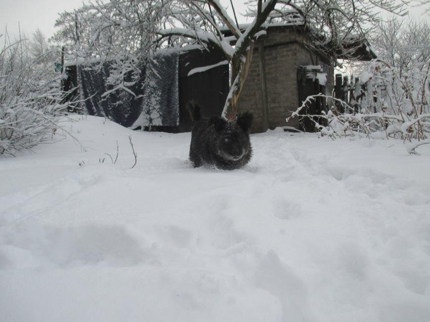 Пес ищет дом и верит, что настоящие любящие хозяева скоро найдутся - ФОТО, фото-1