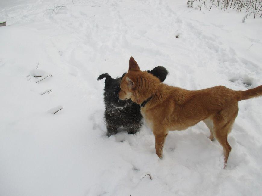 Пес ищет дом и верит, что настоящие любящие хозяева скоро найдутся - ФОТО, фото-2