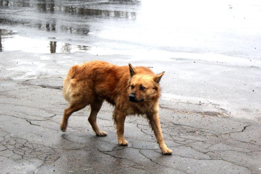 В Мариуполе появится стерилизационный центр для животных (ФОТО), фото-2
