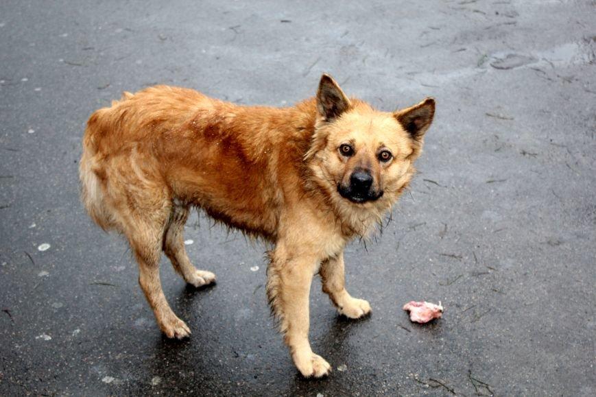 В Мариуполе появится стерилизационный центр для животных (ФОТО), фото-1