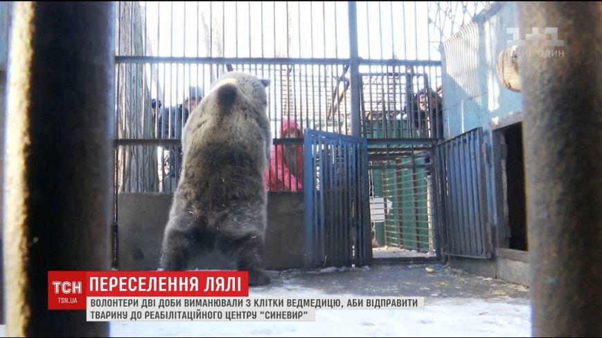 Як ведмедицю Лялю дві доби вмовляли переїхати із Дніпра на Закарпаття: відео, фото-1
