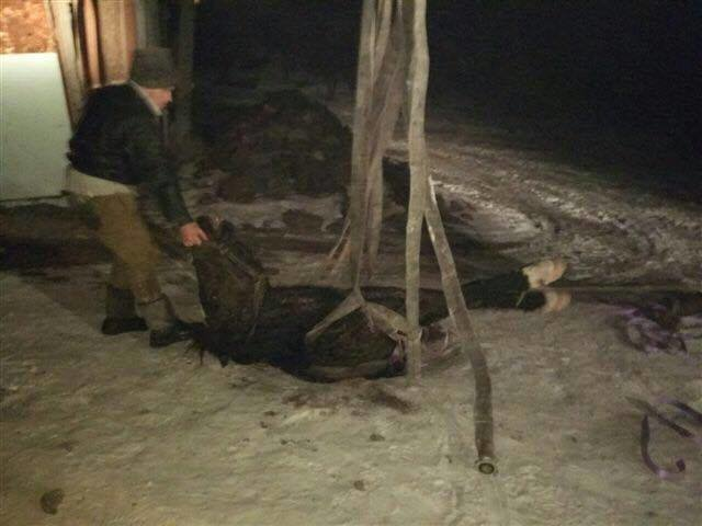 В Кривом Роге в канализационный колодец провалилась лошадь (ФОТО), фото-1